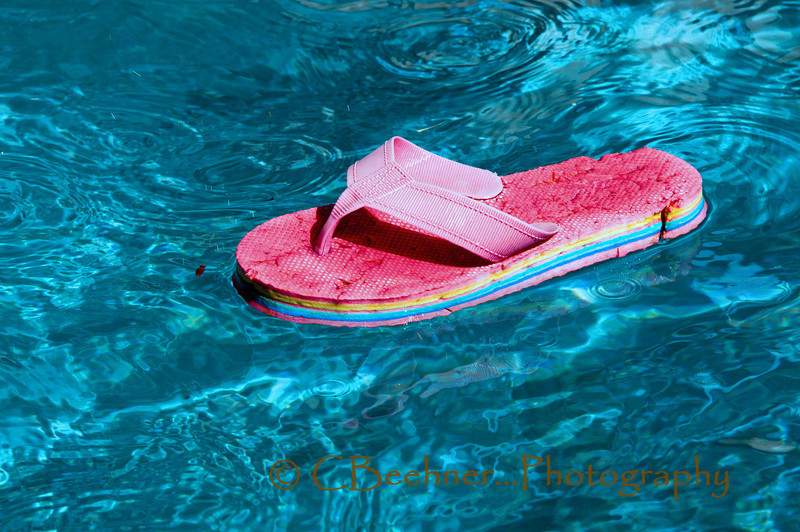 8-20-2009…  Floating Flip Flop<br /> <br /> Another shot from Sunday at the pool…  This is what we were using for the dogs to retrieve; they had not seen it yet apparently.