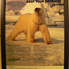 Warning- Polar Bears!