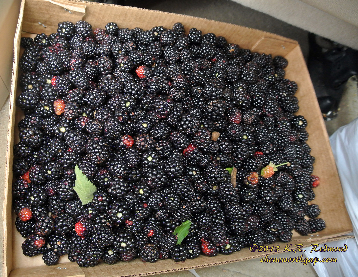 Blackberries (Box No. 1)