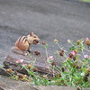 Chipmunk on Rock Eating Food