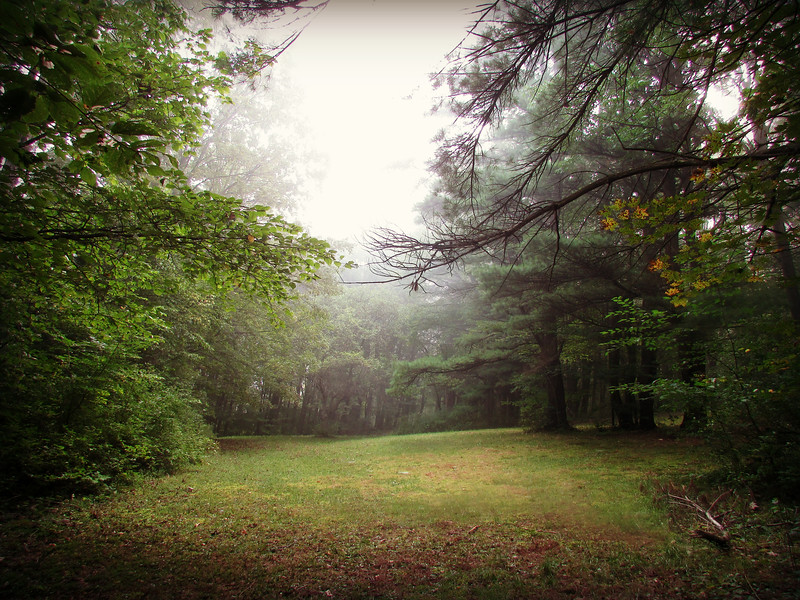 Clearing in the Woods