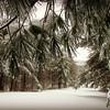 Boulevard of Snow