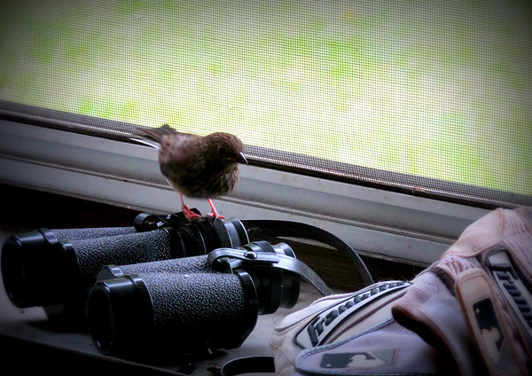 Bird on Binoculars