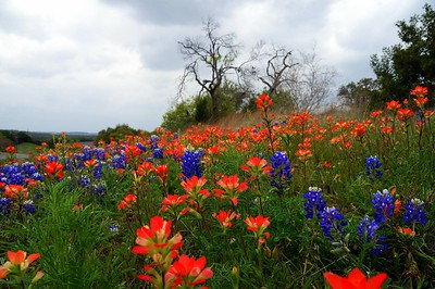Neighborhood 1 - Lady Bird's passion for the beautification of our highways gives us this beautiful blanket of wildflowers surrounding my neighborhood each year