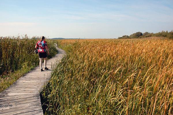 Plum Island - Hellcat Swamp - Marsh Trail