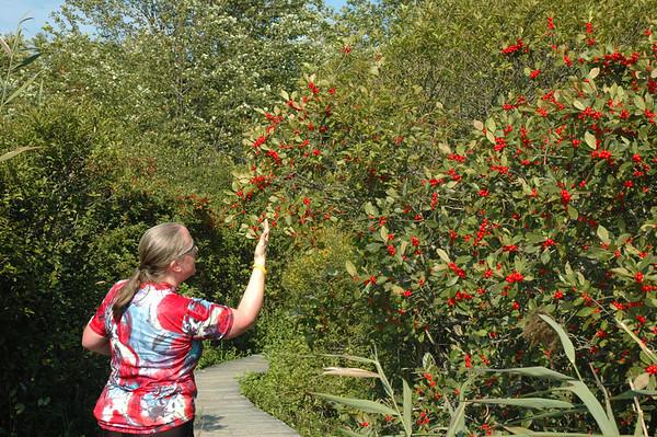 Plum Island - Hellcat Swamp - Marsh Trail - Cherry Trees