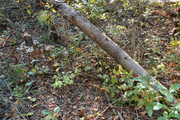 Plum Island - Hellcat Swamp - Marsh Trail - Beaver Opus