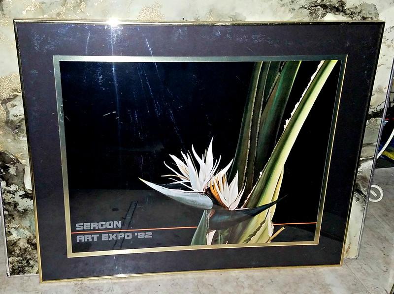 Sergon - Bird of Paradise Art Print