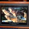 Call of the Wild Wildlife Series Collectible Framed Poster.  30 x 25.  <b>$40</b>