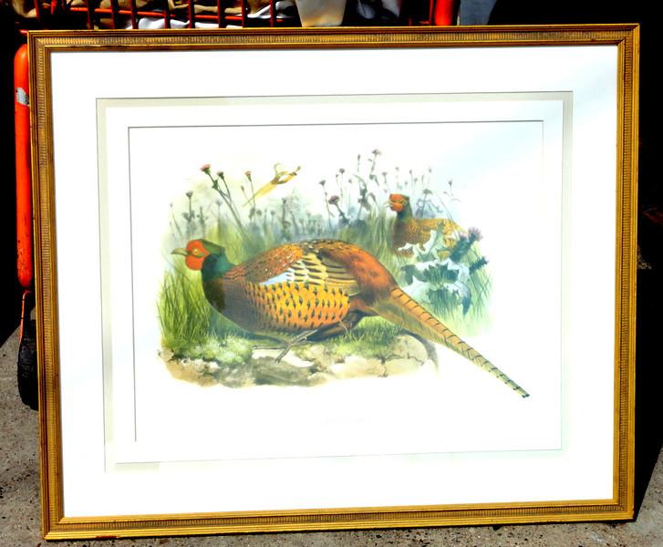 Pheasant - Phasianus Shawii. Ringneck Pheasant, male , classic upland game bird for hunters. 31 x 26.  <b>$35</b>