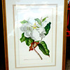 Magnolia Maximo Flora....  22 x 30.  <b>$30</b>