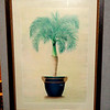 Potted Palm Fine Art Print