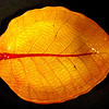 Uniquely Styled Autumn Leaf Glass Serving Plate / Platter.  15 x 10.  <b>$35</b>