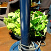 "Dark Blue Candlestick Lamp with Electric Supply Outlet. 26"" <b>$15</b>"