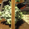 "Basic Slender Wood Table Lamp.  31"" <b>$20</b>"