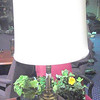 "Brass Lamp with Square Platform Base plus Shade. 37"" <b>$50</b>"