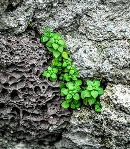 """""""Life Among Rocks"""""""