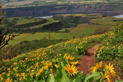 Another favorite no wind activities is the hiking near Rowena Dells. There is a short loop trail for the entire family with great views of the canyons and river. Or for the more energetic there is the hike up the hill for spectacular views of the Gorge.