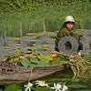 Weeding the Lily Pond
