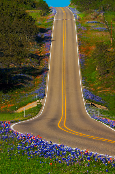 Sure Sign of Spring - Bluebonnets along the Highway