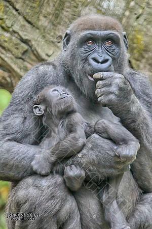 Gorilla Mamas