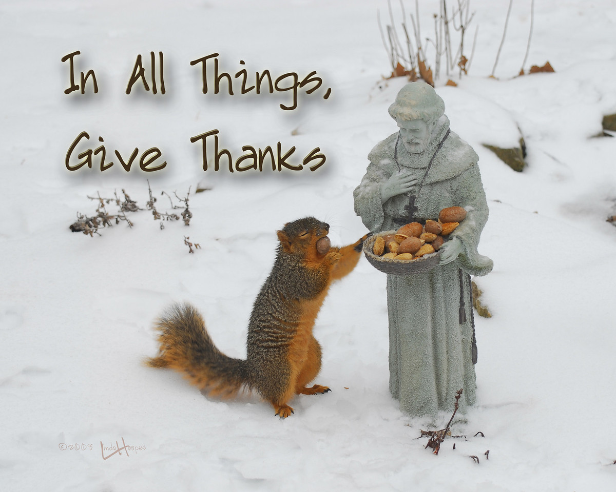 Each day St. Francis' basket gets a hefty portion of nuts. When the squirrels discover the bounty, the basket is emptied in a matter of minutes. This day the squirrel was caught just as he was moving away from the basket and his eyes were closed (in a blink?). It appears he is paused in a moment of saying grace for the meal he is about to receive.