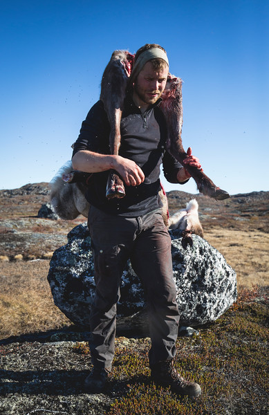 Carrying caribou.