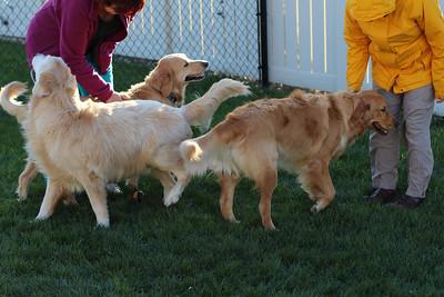 Cooper, Carl, and Gracie