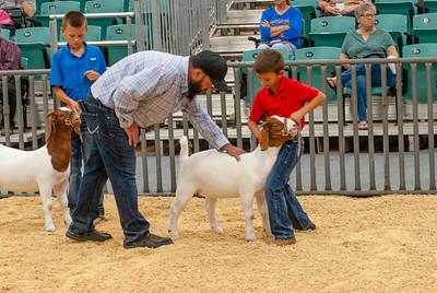 20190822_grady_co_goats-10