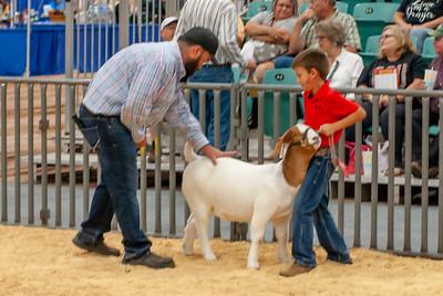 20190822_grady_co_goats-20