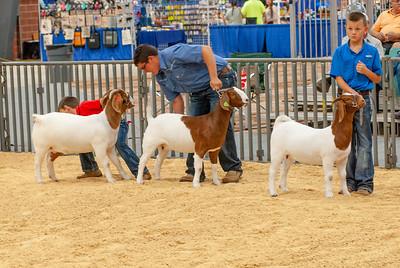 20190822_grady_co_goats-22