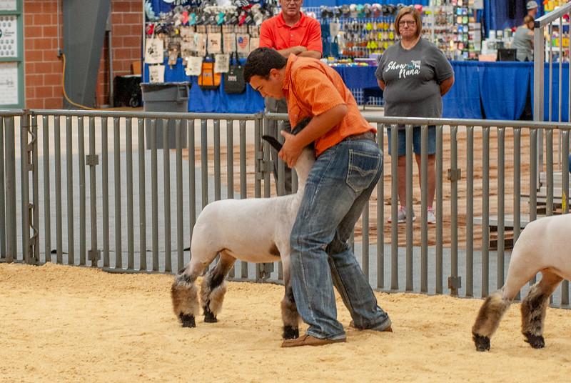 20190822_grady_co_sheep-81