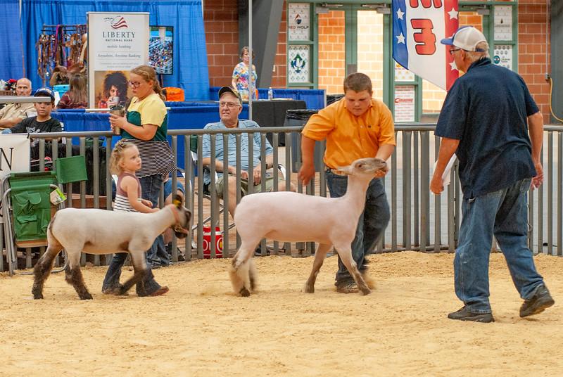 20190822_grady_co_sheep-86