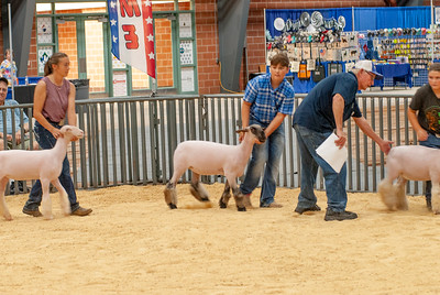 20190822_grady_co_sheep-84