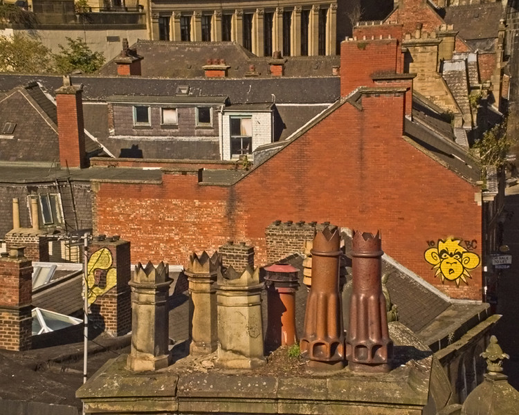 Mighty Mo and Goldpeg on the rooftops in Newcastle