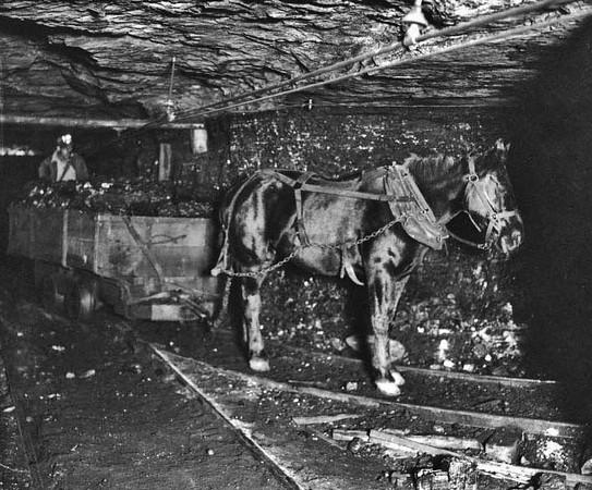 Horse Drawn Coal Car Underground near Grafton, W. Va.<br /> Date ca. 1910