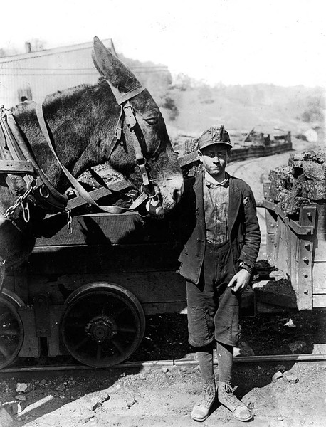 Harry and Sallie. Driver in Maryland Coal Co. Mine, near Sand Lick, Grafton, W. Va. Was afraid to be photo'd because we might make him go to school. Probably 12 years old. Location: Grafton, West Virginia.