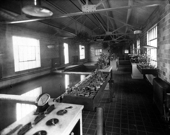 The interior of the City Pump Station with many plants on tables and in the windows in Grafton, West Virginia.