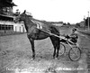 Trotter 'Independence Lady' and Ben Whitehead on a Race Track, Grafton, W. Va.