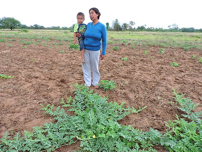 Comunidades flias agricultoras: Campo Largo Enlhet