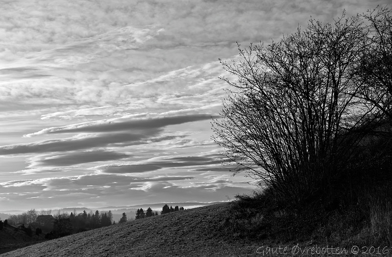 Landskapsdetalj.<br /> Intimate landscape.