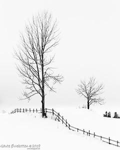Tre i snø Trees