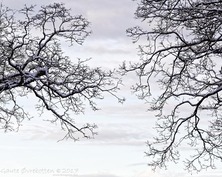 Greiner<br /> Branches