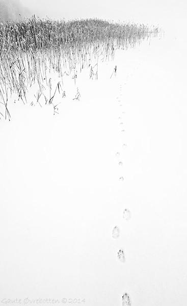 Spor<br /> (Footprints)