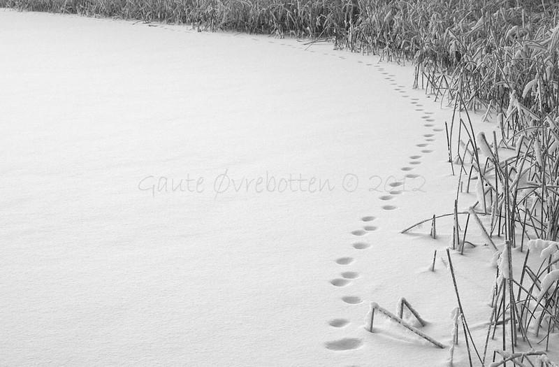 Sporsnø (Tracks in the snow.)