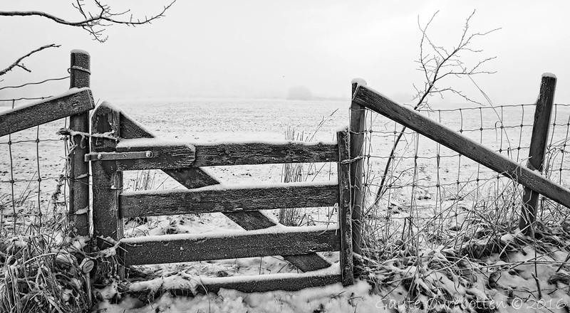 Grå dag , rimkvit grind<br /> (Frosted gate)