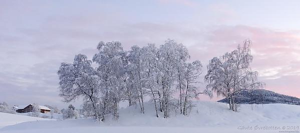 Trekrull (Clump of trees)