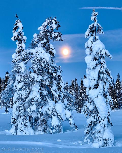 Vintertre VI  (Trees and full moon)