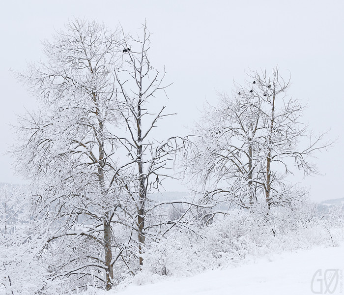 Vintertre III  (Trees with birds)