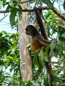 GranadaMarguerite_Monkey2